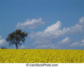 arbre, colza