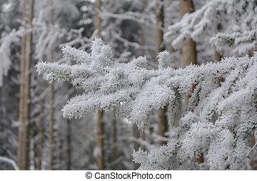 arbre conifère, détail, rime