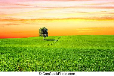 arbre, coucher soleil