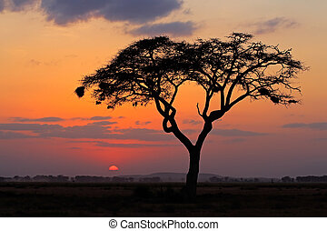 arbre, coucher soleil, silhouetted