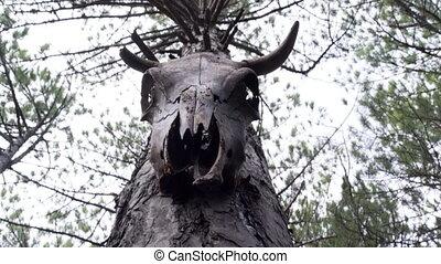 arbre, crâne vache