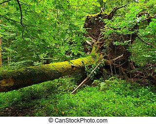 arbre, déraciné, forêt, baissé