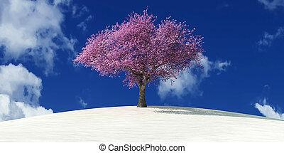 arbre, désert
