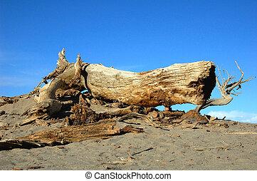arbre, désert, mort