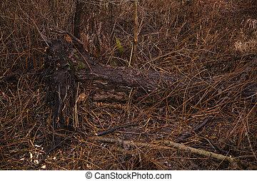 arbre, détruit, après, déraciné, orage