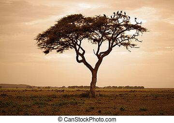 arbre, dans, les, africaine, savane