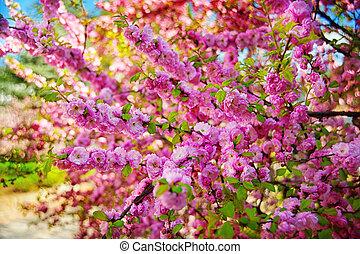 arbre, dehors, fleurs, amande, ciel rose, bleu, branche, printemps