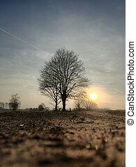 arbre, derrière, silhouette, coucher soleil, rural