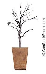 arbre empoté, white., mort