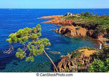 arbre, esterel, côte, azur, france., cote, sea., provence, ...