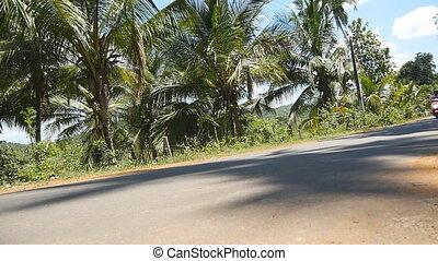 arbre, exotique, vélomoteur, scooter, paume, femme, conduit...