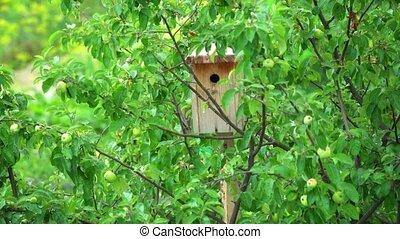 arbre, fait main, pomme, birdhouse bois