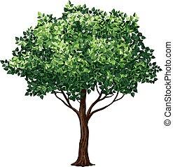 arbre, feuillage