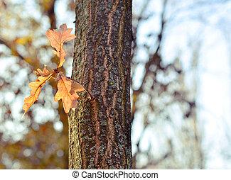 arbre, feuilles, chêne, nature