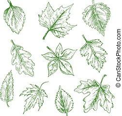 arbre, feuilles, isolé, sketched, vert