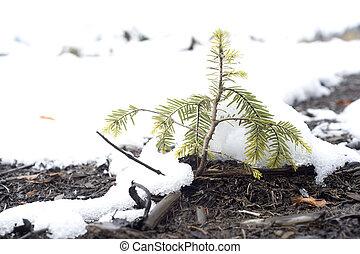 Arbre feuilles persistantes crimea ukraine arbutus for Arbres a feuilles persistantes