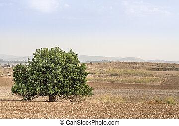 arbre, field.