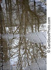 arbre, flaque, branches, reflet