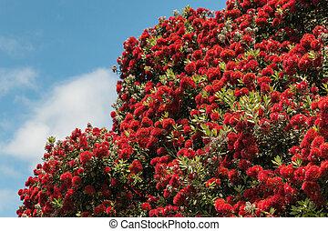 arbre, fleur, pohutukawa