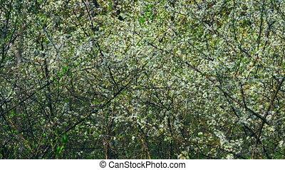 arbre, fleurir, moule, yard, vue
