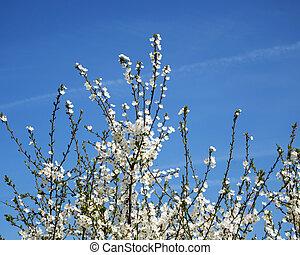 arbre fleurissant