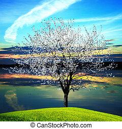 arbre, floraison, coucher soleil