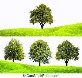 arbre, fond, nature
