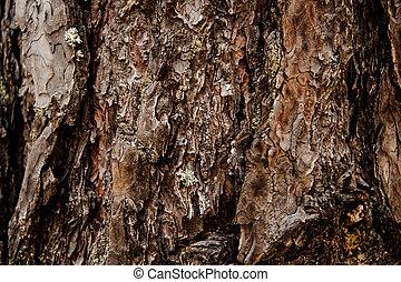 arbre, forêt automne, fond, textured, écorce