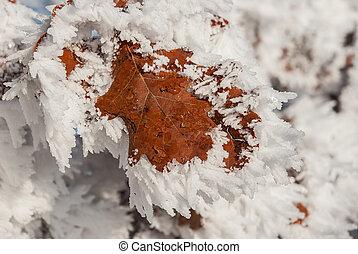arbre, gelée, feuille
