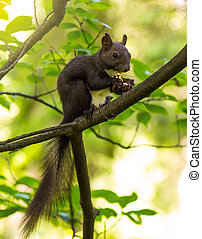 arbre, gnaws, fou, écureuil