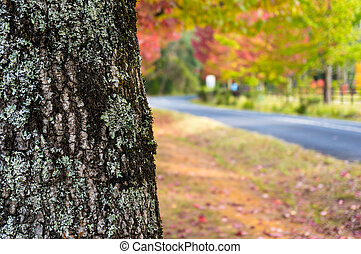 arbre, haut, coffre, fond, fin, automne