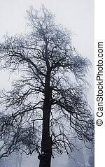 arbre hiver, dans, brouillard