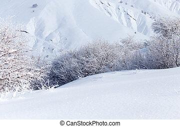 arbre, hiver,  nature
