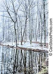 arbre hiver, neige, lac, réflexions, orage, pendant, ligne