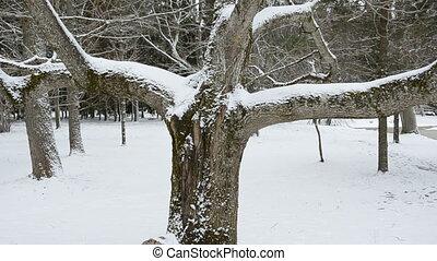 arbre hiver, parc, neige