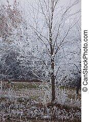 arbre, hiver