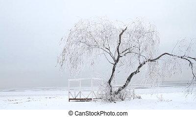 arbre hiver, solitaire