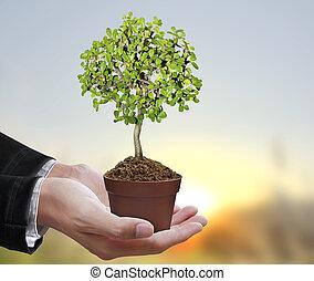 arbre, humain, tenue, mains