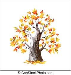 arbre, isolé, automne, fond, blanc, érable