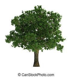arbre, isolé, blanc