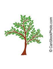 arbre, isolé, illustration, arrière-plan., vecteur, blanc
