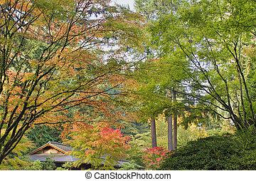 arbre, japonaise, automne, droit, grand, érable