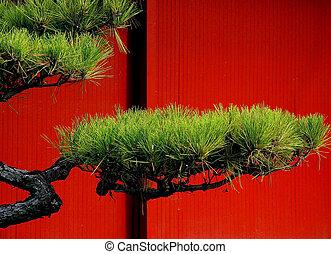 arbre, japonaise, pin