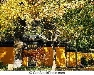 arbre, jaune, feuilles automne