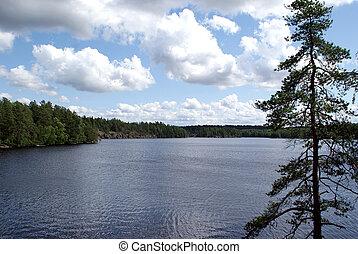arbre, lac, pin, vue