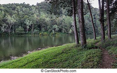 arbre, lac, vue, reflet, pin, beau