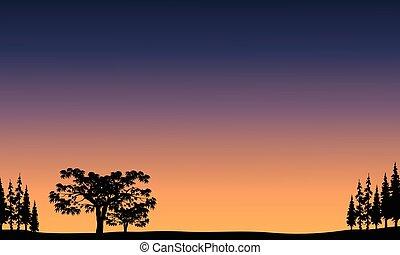 arbre, levers de soleil, vue