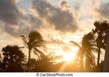 arbre, lucarne, dos, exotique, nuit, lapse., plage, silhouette, fond, noix coco, soleil, atmosphérique, humeur, paume, lit, île, sunset., temps, dramatique, crépuscule, nature, sombre, lumière soleil, climate., scene., arrière-plan.