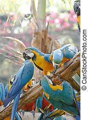 arbre, macaw, coloré