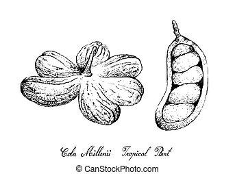 arbre, main, millenii, fruits, dessiné, kola, tas